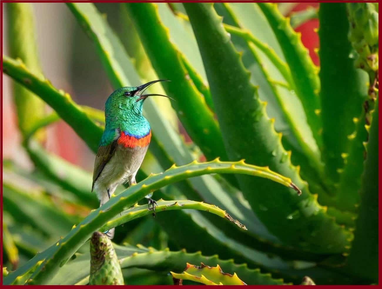 Bienfaits de la plante d'Aloe Vera: gel & jus [visage cheveux peau acné]