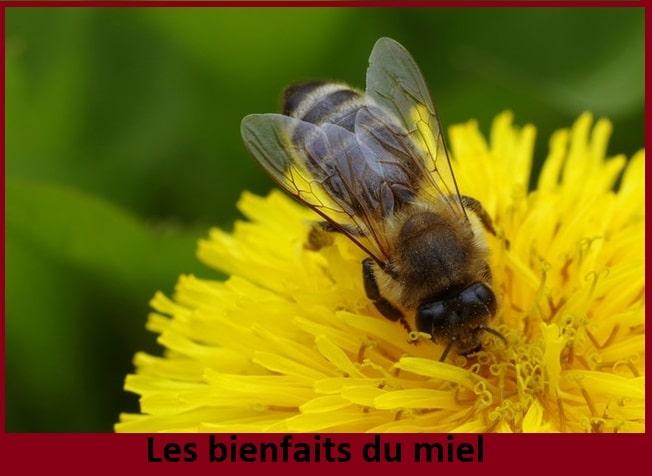 Miel: 16 bienfaits du miel et autres vertus nutritionnelles