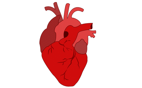 le cœur et la CRP
